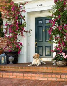 dog_at_entryway